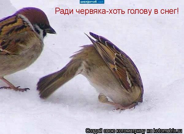 Котоматрица: Ради червяка-хоть голову в снег!