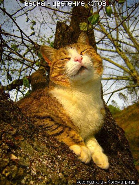 http://kotomatrix.ru/images/lolz/2009/05/30/gR.jpg