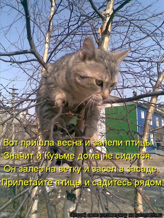 Котоматрица: Вот пришла весна и запели птицы. Значит и Кузьме дома не сидится. Он залез на ветку и засел в засаде. Прилетайте птицы и садитесь рядом!