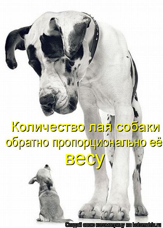 Котоматрица: Количество лая собаки обратно пропорционально её весу обратно пропорционально её весу весу