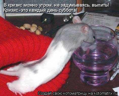 Котоматрица: В кризис можно утром, не задумываясь, выпить! Кризис -это каждый день суббота!