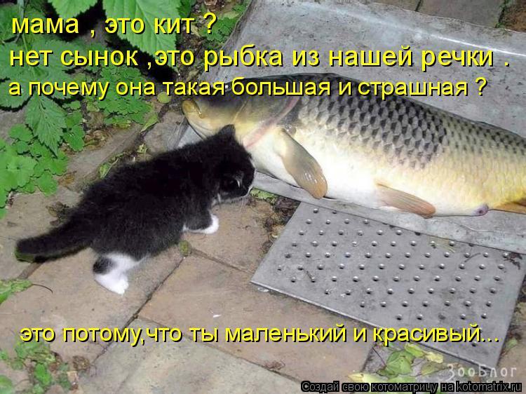 Котоматрица: мама , это кит ? нет сынок ,это рыбка из нашей речки . а почему она такая большая и страшная ?  это потому,что ты маленький и красивый...