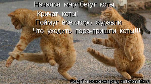Котоматрица: Начался  март,бегут  коты, Кричат  коты! Поймут  всё,скоро  журавли Что  уходить  пора-пришли  коты!!!