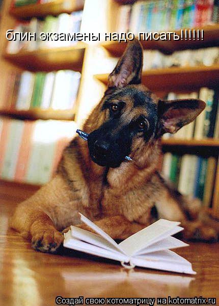 Котоматрица: блин экзамены надо писать!!!!!!