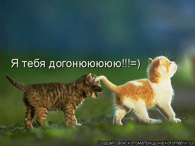 Котоматрица: Я тебя догонююююю!!!=)