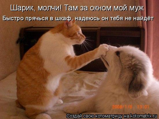 Котоматрица: Шарик, молчи! Там за окном мой муж Быстро прячься в шкаф, надеюсь он тебя не найдёт