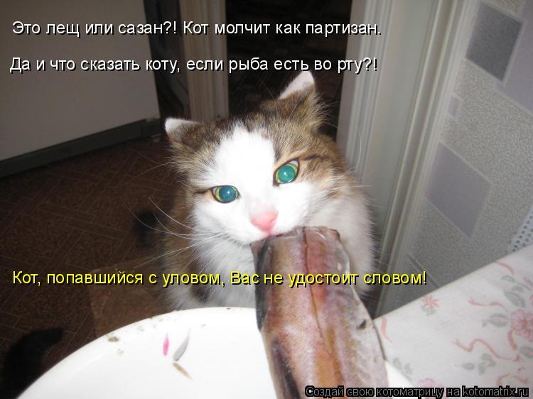 Котоматрица: Это лещ или сазан?! Кот молчит как партизан. Да и что сказать коту, если рыба есть во рту?! Кот, попавшийся с уловом, Вас не удостоит словом!