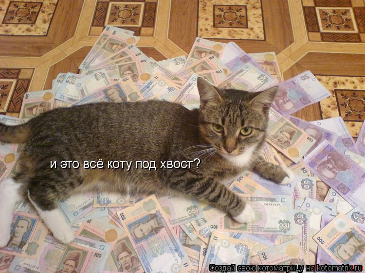 Котоматрица: и это всё коту под хвост?