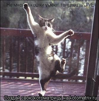Котоматрица: Не многие кошки умеют танцевать JIVE!