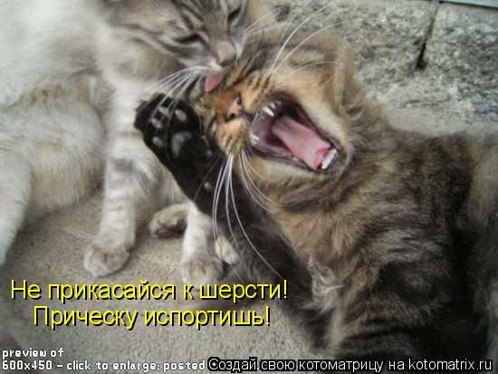 Котоматрица: Не прикасайся к шерсти!  Прическу испортишь!
