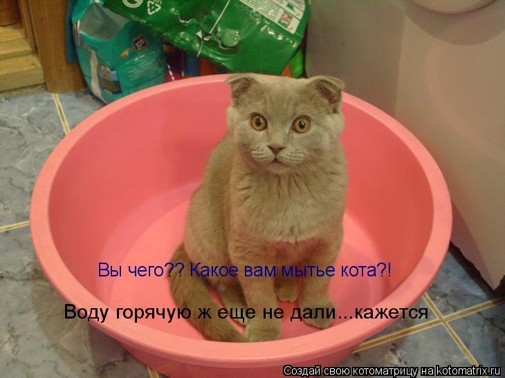 Котоматрица: Вы чего?? Какое вам мытье кота?! Воду горячую ж еще не дали...кажется