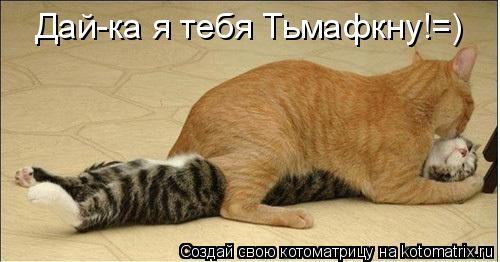 Котоматрица: Дай-ка я тебя Тьмафкну!=)