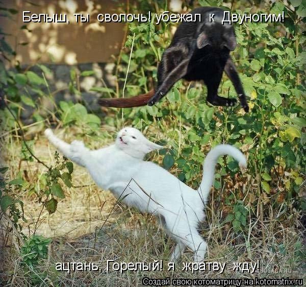 Котоматрица: Белыш, ты  сволочь! убежал  к  Двуногим! ацтань, Горелый! я  жратву  жду!
