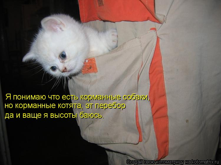 Котоматрица: Украина,вперед!!!