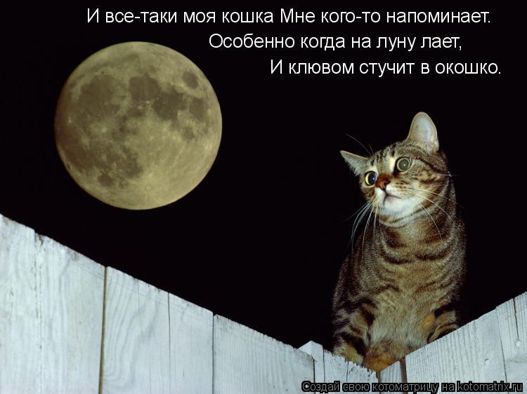 Котоматрица: И все-таки моя кошка Мне кого-то напоминает. Особенно когда на луну лает, И клювом стучит в окошко.