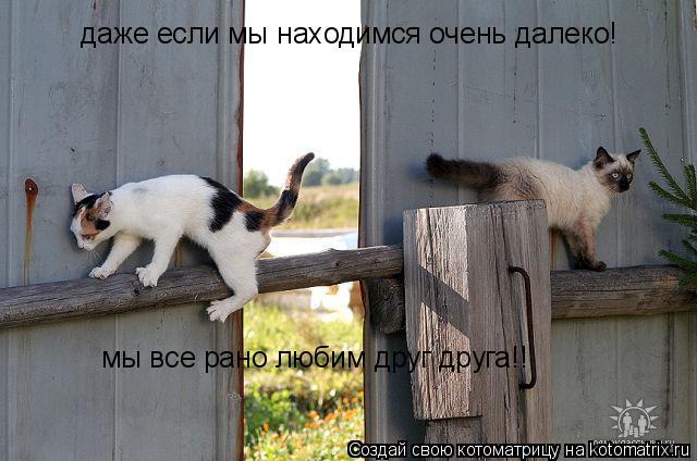 Котоматрица: даже если мы находимся очень далеко! мы все рано любим друг друга!!