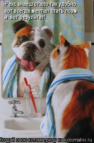 Котоматрица: -Рекс знаеш стало так удобно вот всегда мечтал стать псом и  вот результат!