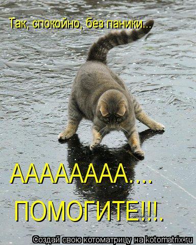Котоматрица: Так, спокойно, без паники... АААААААА.... ПОМОГИТЕ!!!.