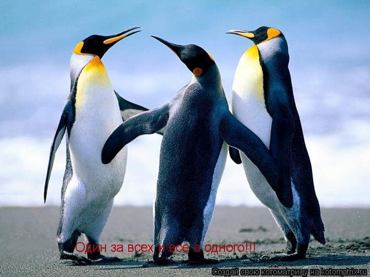 Котоматрица: Один за всех и все а одного!!!