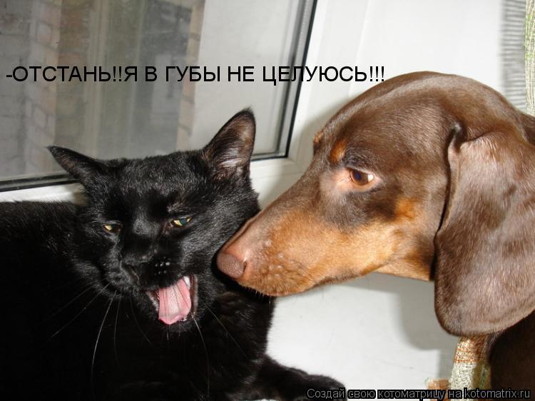 Котоматрица: -ОТСТАНЬ!!Я В ГУБЫ НЕ ЦЕЛУЮСЬ!!!