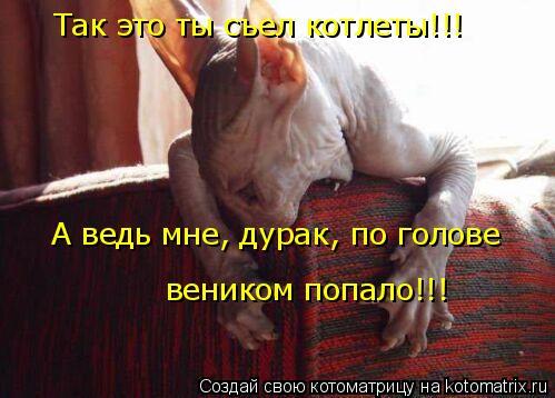Котоматрица: Так это ты съел котлеты!!!  А ведь мне, дурак, по голове  веником попало!!!