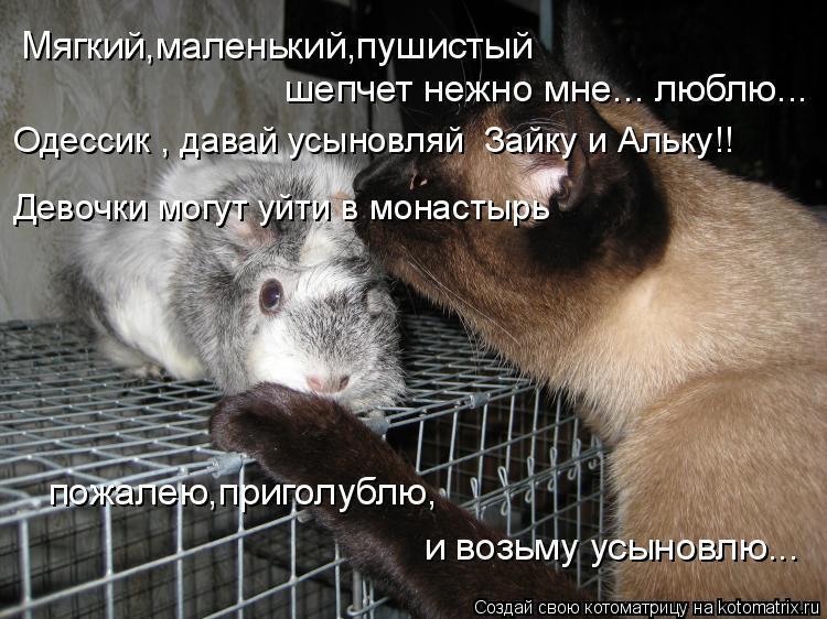 Котоматрица: Одессик , давай усыновляй  Зайку и Альку!! Девочки могут уйти в монастырь