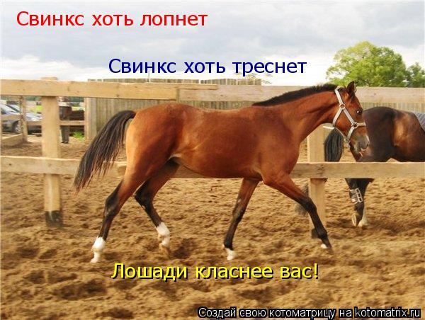 Котоматрица: Свинкс хоть лопнет Свинкс хоть треснет Лошади класнее вас!