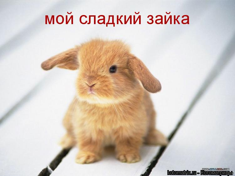 Котоматрица: мой сладкий зайка