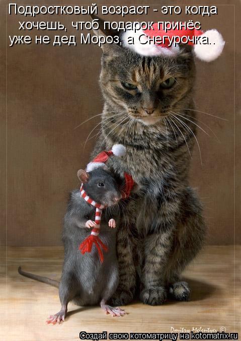 Котоматрица: хочешь, чтоб подарок принёс Подростковый возраст - это когда уже не дед Мороз, а Снегурочка..