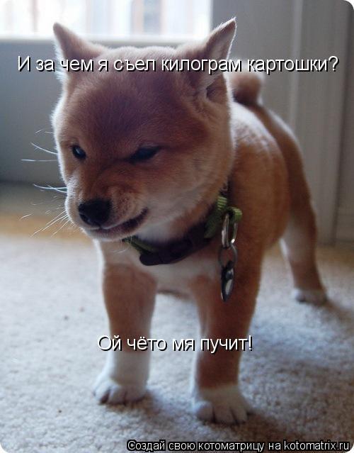 Котоматрица: И за чем я съел килограм картошки? Ой чёто мя пучит!