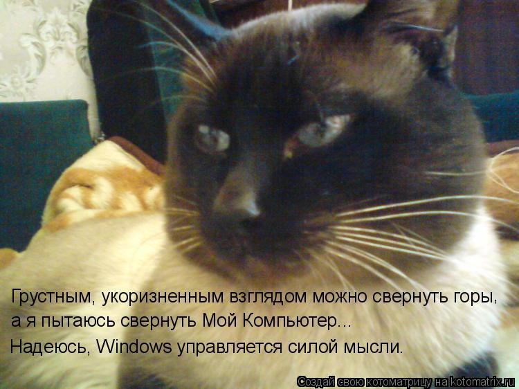 Котоматрица: Грустным, укоризненным взглядом можно свернуть горы а я пытаюсь свернуть Мой Компьютер...  , Надеюсь, Windows управляется силой мысли.