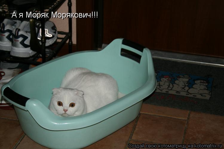 Котоматрица: А я Моряк Морякович!!!