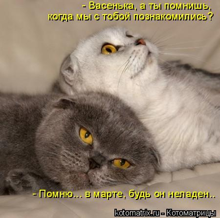 Котоматрица: - Васенька, а ты помнишь,  когда мы с тобой познакомились?  - Помню... в марте, будь он неладен..