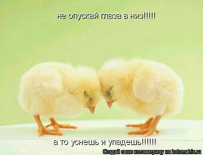 Котоматрица: не опускай глаза в низ!!!!! а то уснешь и упадешь!!!!!!