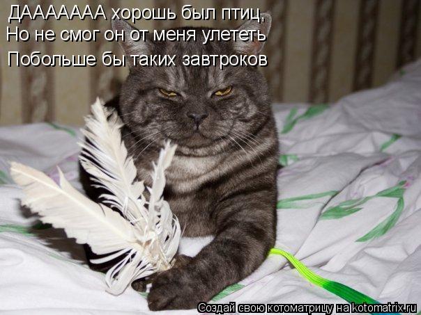 Котоматрица: ДААААААА хорошь был птиц, Но не смог он от меня улететь Побольше бы таких завтроков