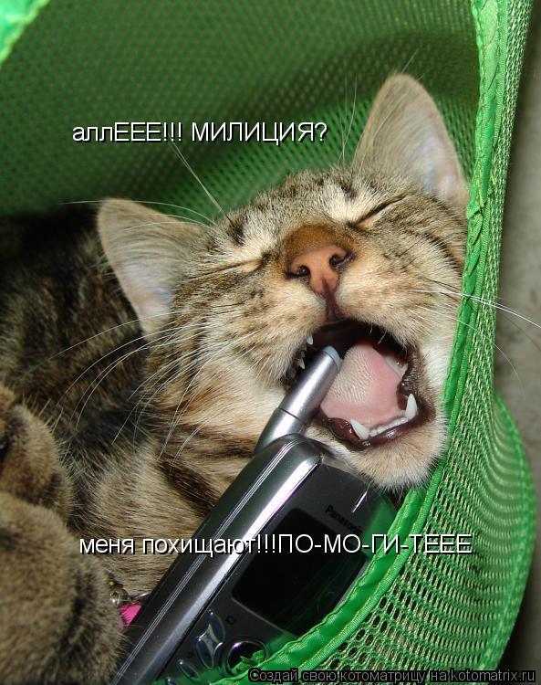 Котоматрица: аллЕЕЕ!!! МИЛИЦИЯ? меня похищают!!!ПО-МО-ГИ-ТЕЕЕ