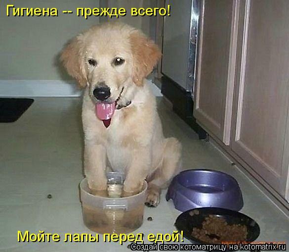 Котоматрица: Гигиена -- прежде всего! Мойте лапы перед едой!