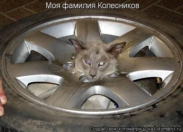 Котоматрица: Моя фамилия Колесников