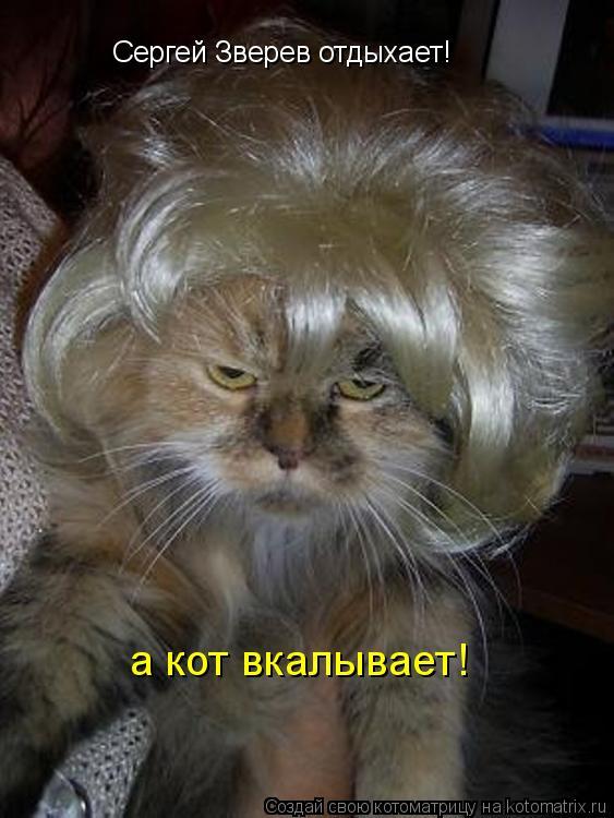 Котоматрица: Сергей Зверев отдыхает! а кот вкалывает!