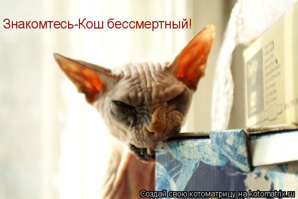 Котоматрица: Знакомтесь-Кош бессмертный!