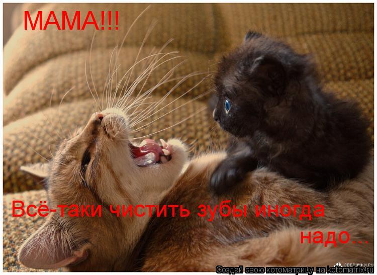Котоматрица: МАМА!!! Всё-таки чистить зубы иногда надо...