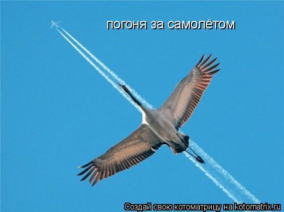 Котоматрица: погоня за самолётом