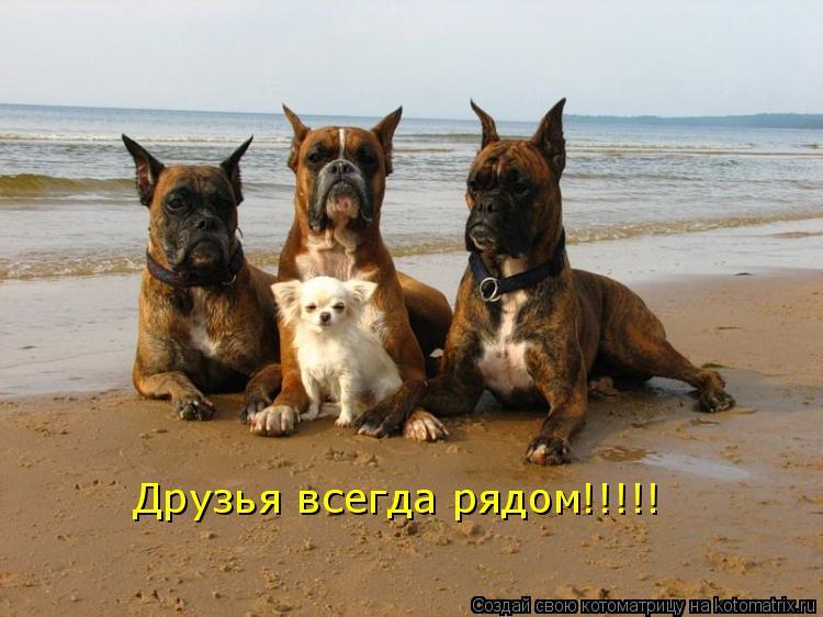 Котоматрица: Друзья всегда рядом!!!!!