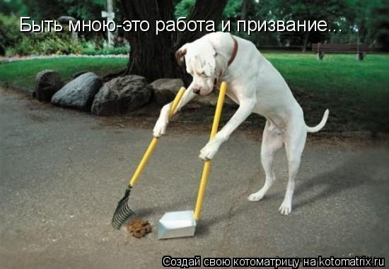 Котоматрица: Быть мною-это работа и призвание...