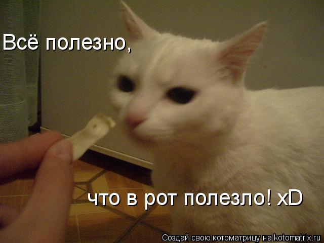 Котоматрица: Всё полезно, что в рот полезло! xD Всё полезно, что в рот полезло! xD