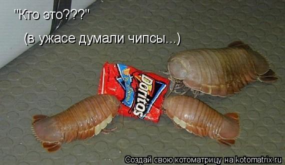 """Котоматрица: """"Кто это???"""" (в ужасе думали чипсы...)"""