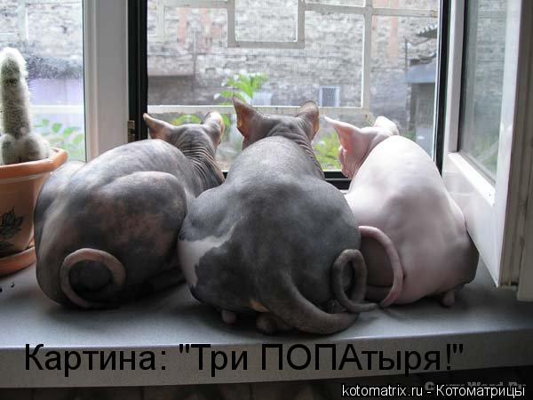 """Котоматрица: Картина: """"Три ПОПАтыря!"""""""
