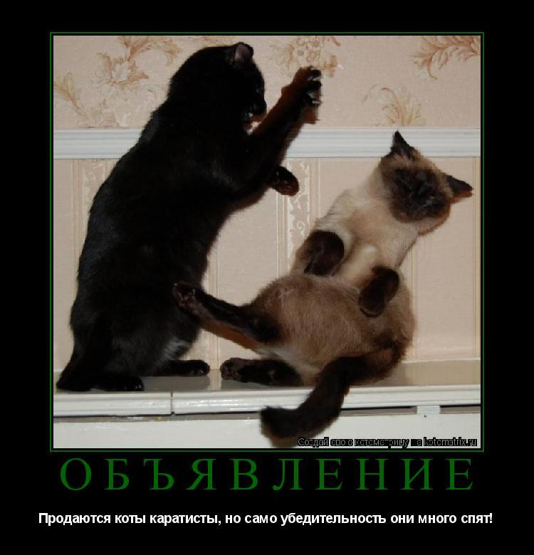 Котоматрица:      ОБЪЯВЛЕНИЕ Продаются коты каратисты, но само убедительность они много спят!
