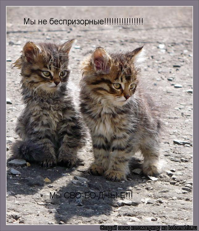 Котоматрица: Мы не беспризорные!!!!!!!!!!!!!!!! Мы СВО-БО-ДНЫ-Е!!!