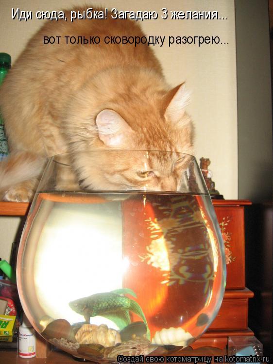 Котоматрица: Иди сюда, рыбка! Загадаю 3 желания... вот только сковородку разогрею...